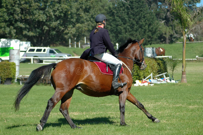 Download Horse riding sport stock photo. Image of competition, animal - 2701620