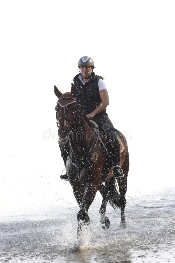 Horse riding in the water royalty free stock images