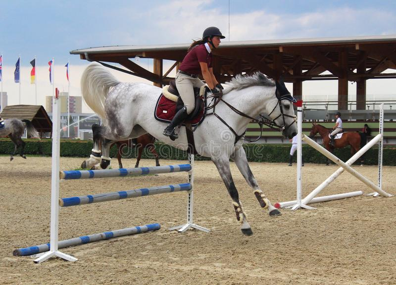 Sport -show jumping training - white horse jumping stock image