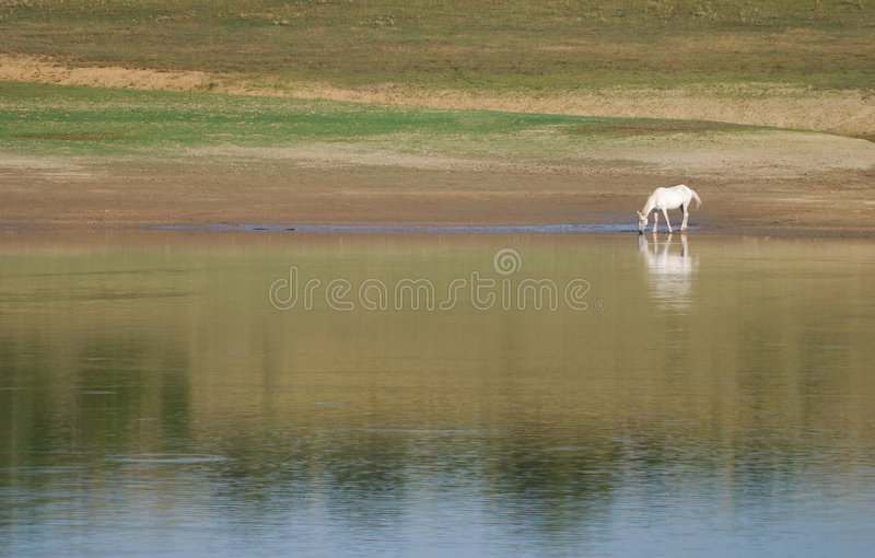 Horse on river