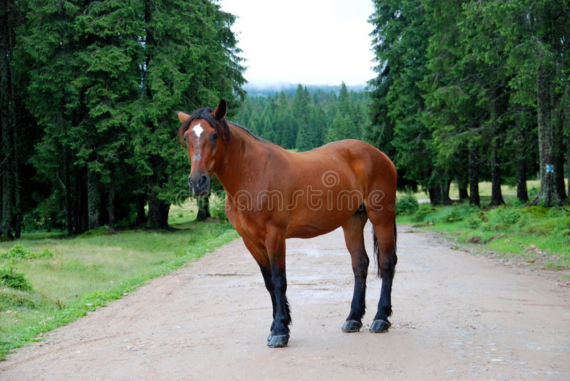 Horse on the road stock photos