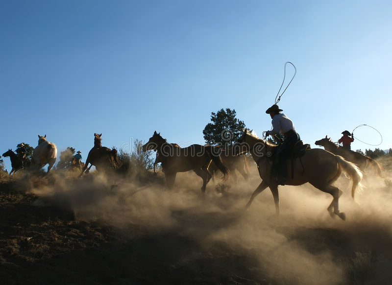 Horse Roundup at Dusk royalty free stock photography