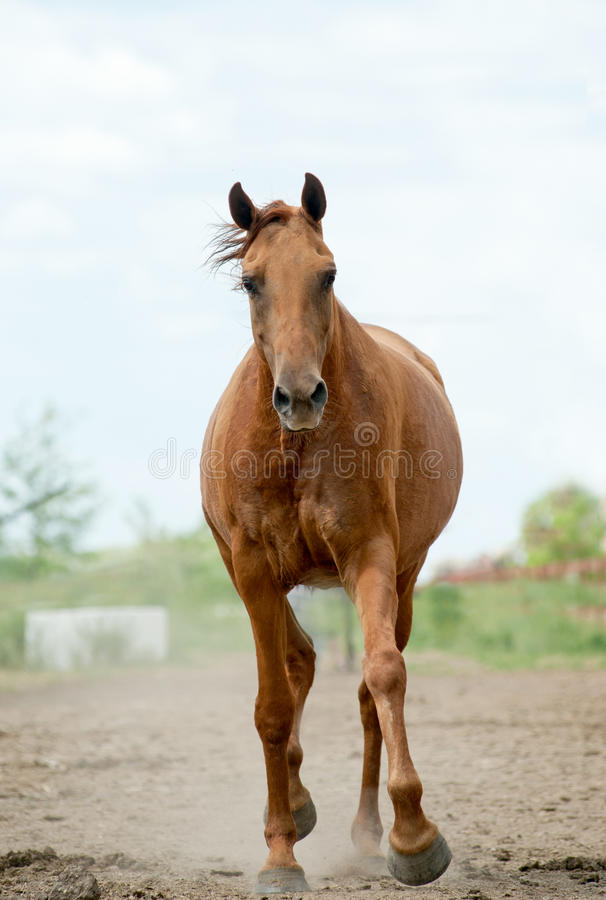 Horse run royalty free stock images