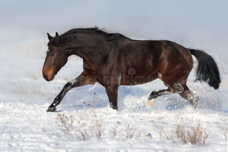 Horse run fun in snow field royalty free stock photos
