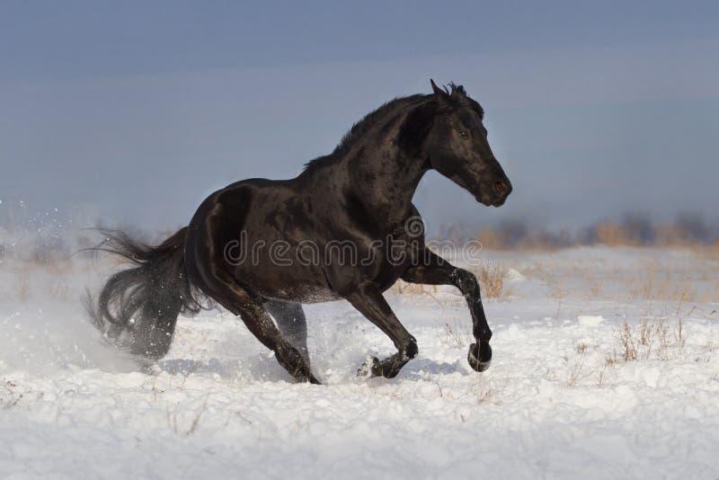 Horse run fun in snow field royalty free stock image