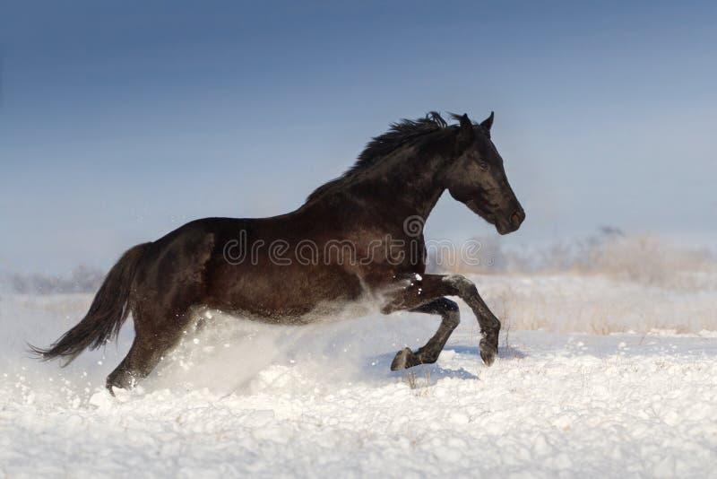 Horse run in winter snow day stock photo