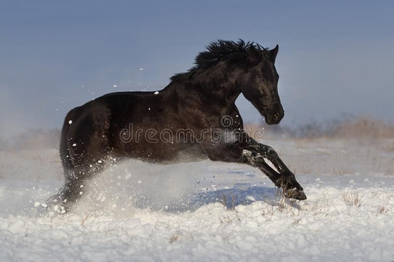 Horse jump in snow royalty free stock photo
