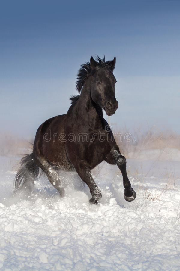 Horse run fun in snow pasture royalty free stock photography