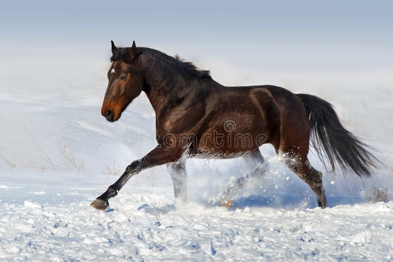 Horse run fun in winter snow royalty free stock photo