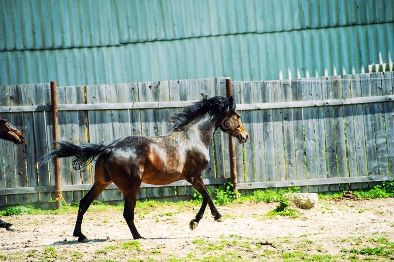 Horse run gallop in meadow stock photos