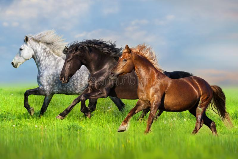 Horse run on pasture stock photo