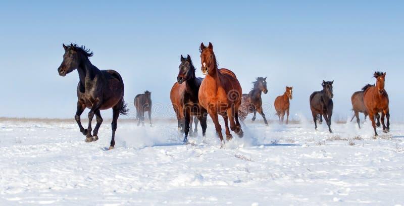 Horse run in snow royalty free stock photos
