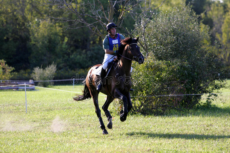 Horse Running In A Competition Editorial Image - Image of