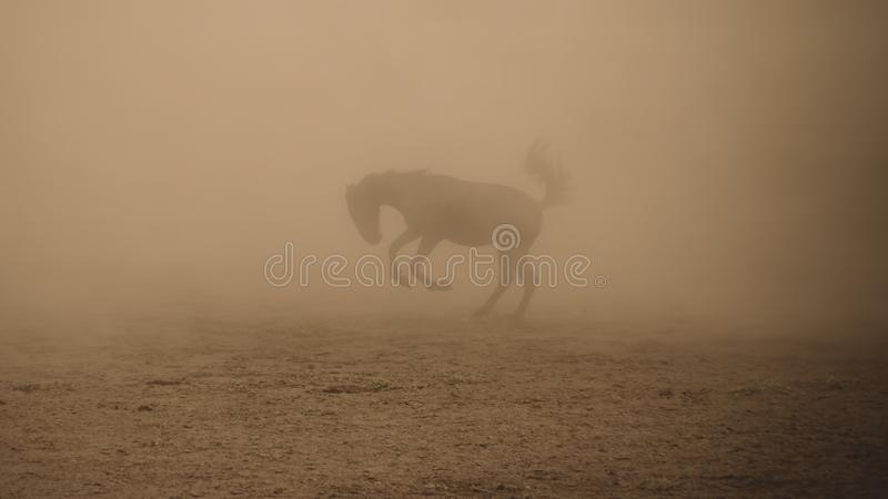 Horse running gallop in dusty environment royalty free stock photography