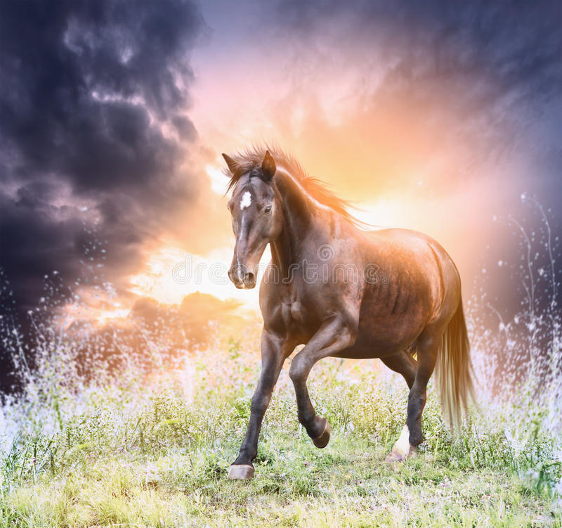 Horse running green field over dramatic sky stock photos