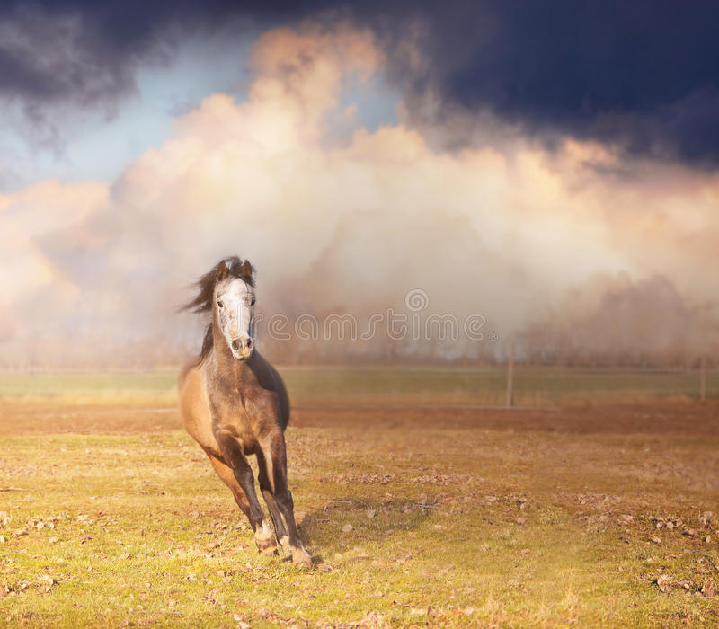 Horse running on pasture over storm sky. Horse running on pasture over field and storm sky royalty free stock image