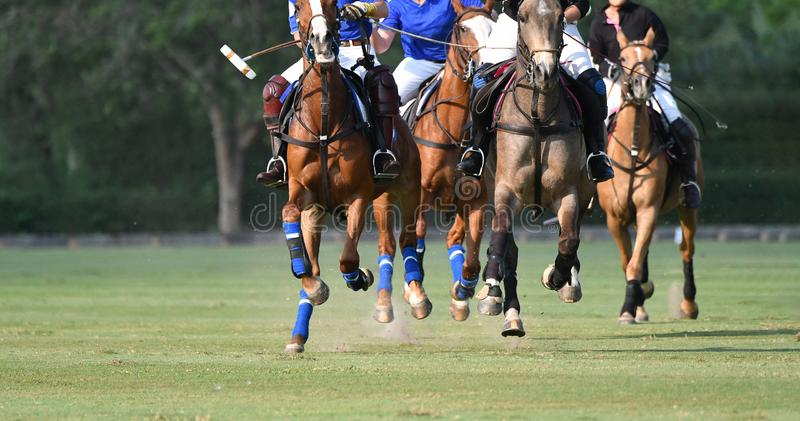 Horse running in polo match. Polo players riding horses on the field, horse pony running in match royalty free stock photo