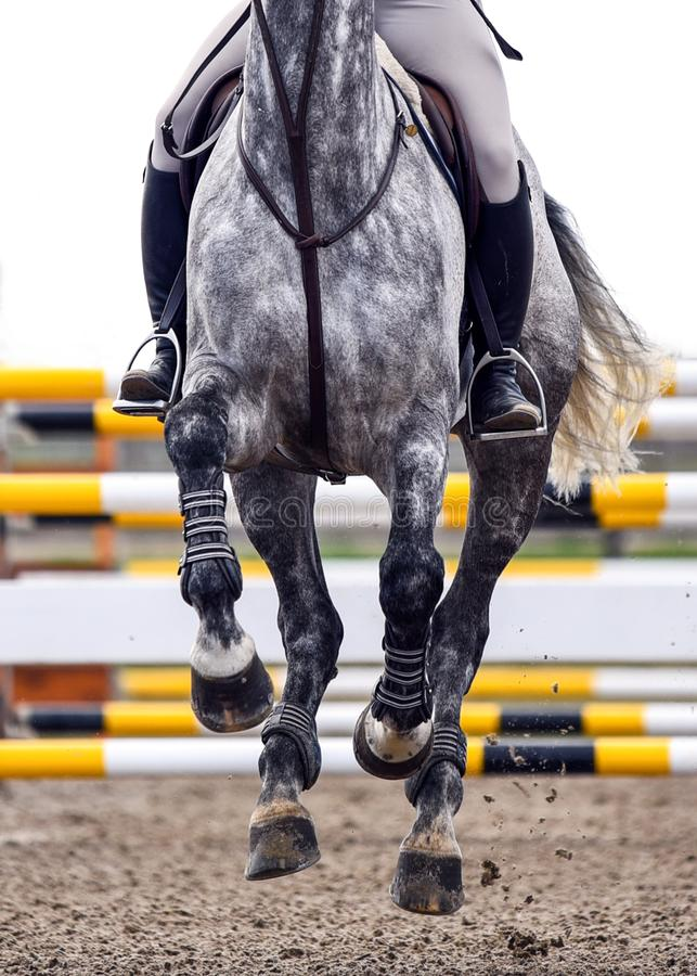 Horse running during a show jumping competition. Horse running a course during a show jumping competition stock photo