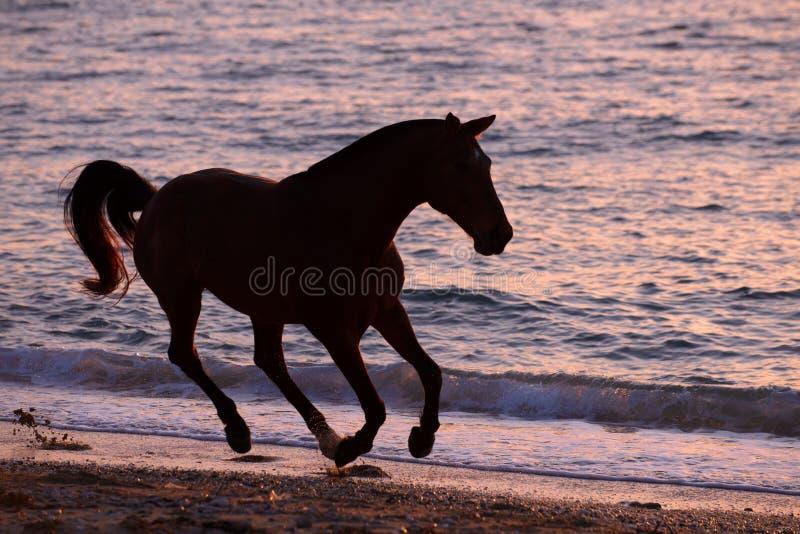 Download Horse Running Through Water Stock Image - Image: 31967035
