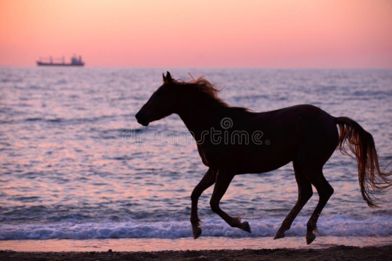 Download Horse Running Through Water Royalty Free Stock Photo - Image: 31967765