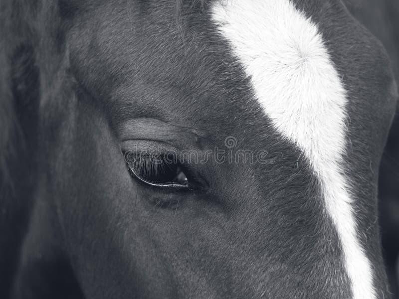 The horse's amazing eye royalty free stock photo