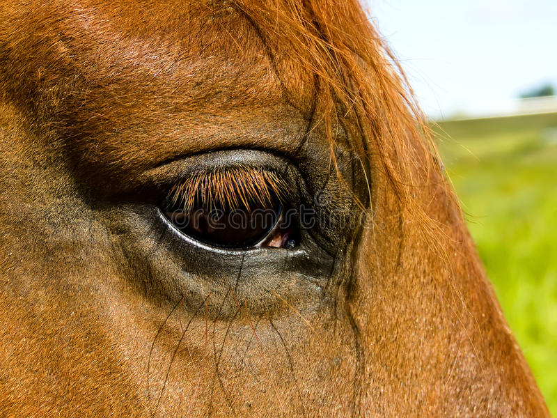 Horse S Eye Royalty Free Stock Photo