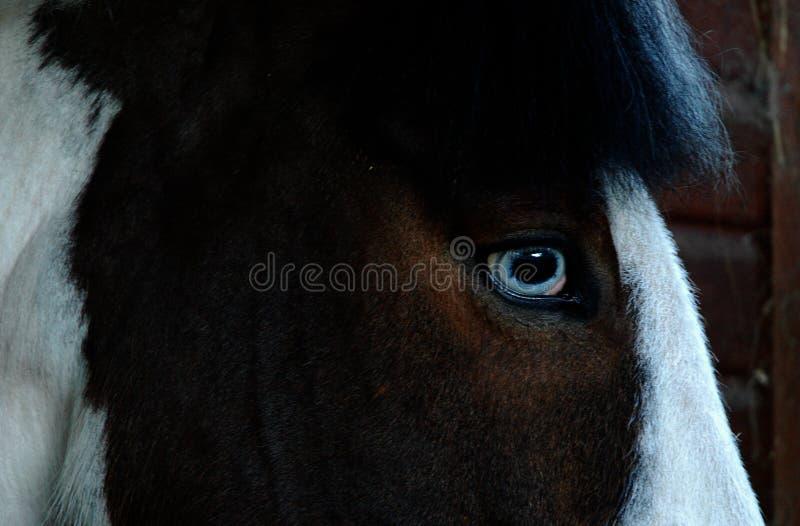 Horse's Eye stock photos