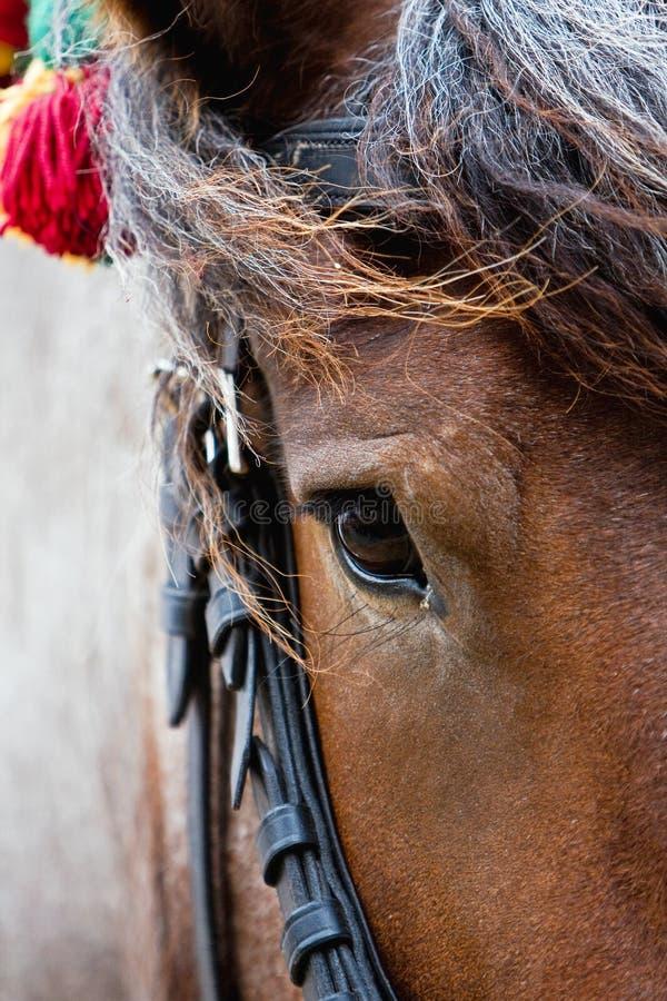 A horse's head. royalty free stock photo