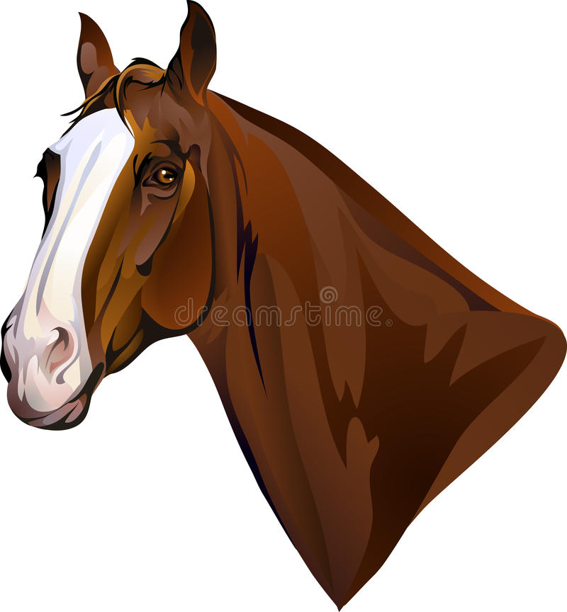 Download Horses head turning looks stock vector. Image of neck - 34634640