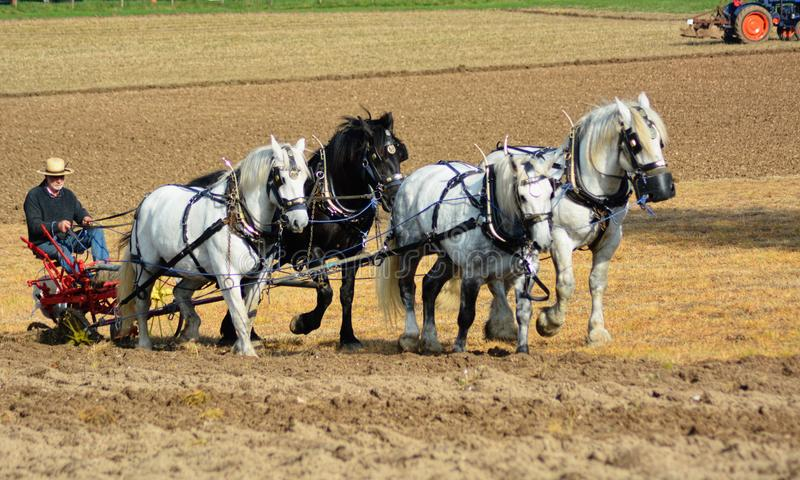 Horse`s  Ploughing field. A four horse ploughing team work a field in the countryside conjuring up memories of how farming used to be done royalty free stock photos
