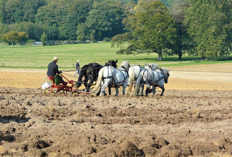 Horse`s  Ploughing field. A Shire horse ploughing team work a field in the countryside conjuring up memories of how farming used to be done royalty free stock image