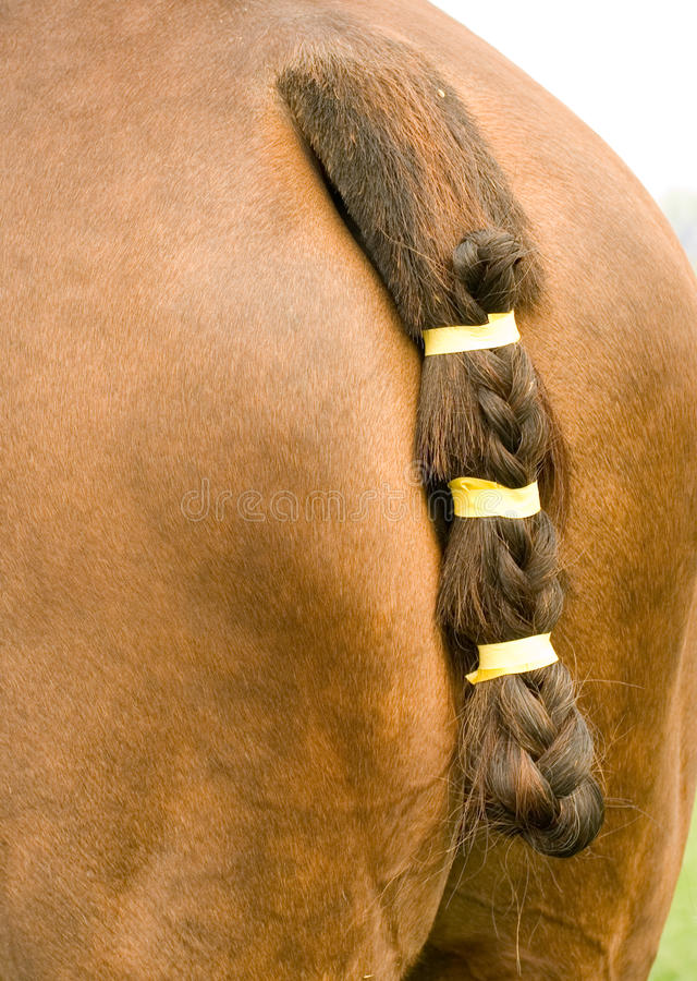 Download Horse's tail stock image. Image of braid, brown, match - 24850119