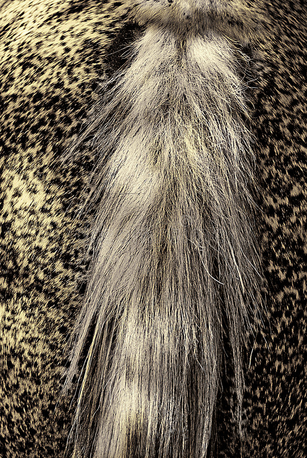 Horse's Tail stock photo