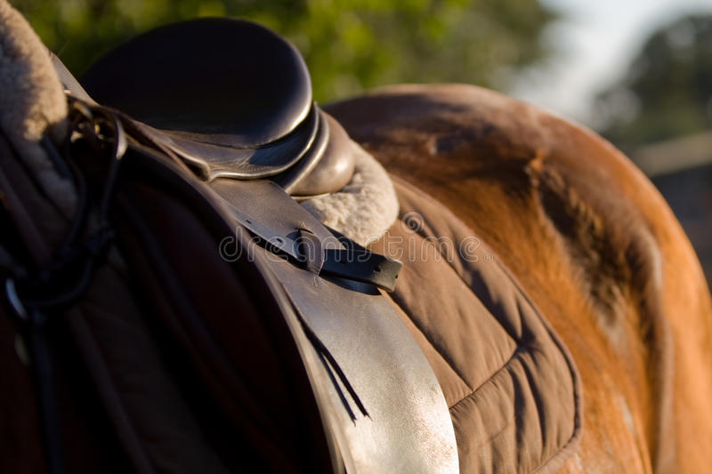 Download Horse And Saddle Royalty Free Stock Images - Image: 22431419