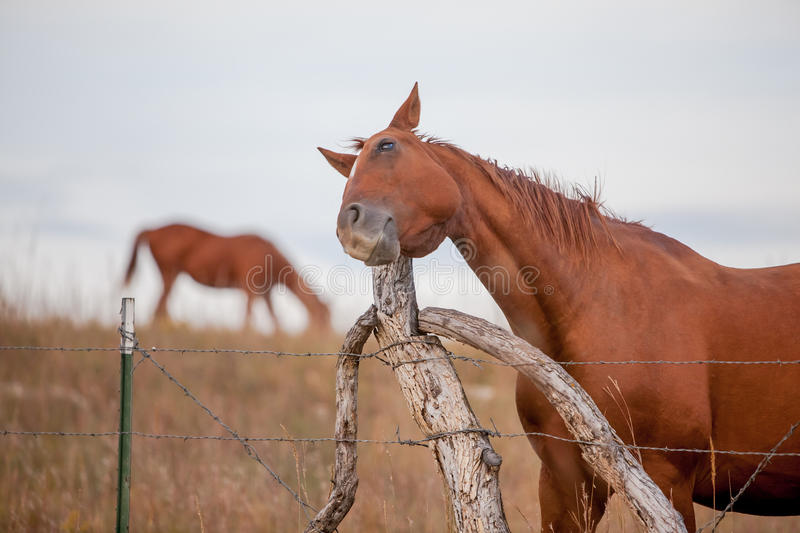Horse scratches itch royalty free stock photography