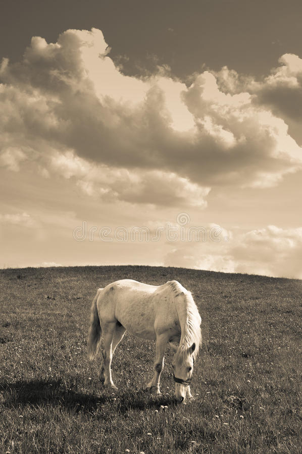 Download Horse in Sepia stock image. Image of cloud, landscape - 27710275