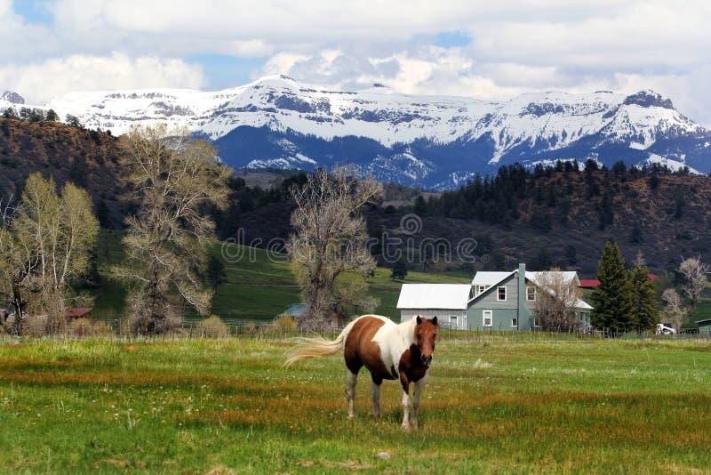 Horse Serenity royalty free stock photos