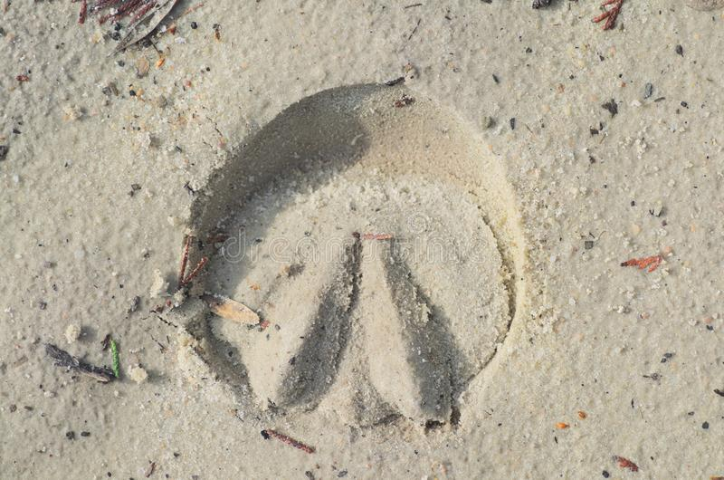 Horse shoes track. On the beach stock photos