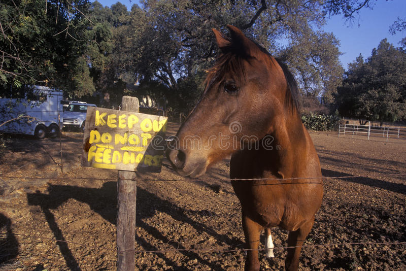 Horse by sign, do not feed horse, Ojai, CA stock image
