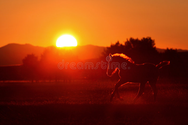 Horse silhouette stock photos