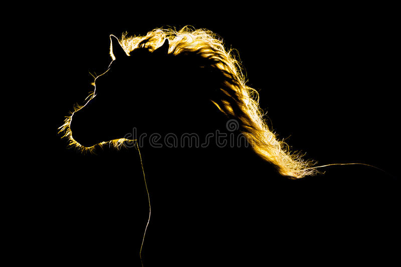 Horse silhouette on black royalty free stock image