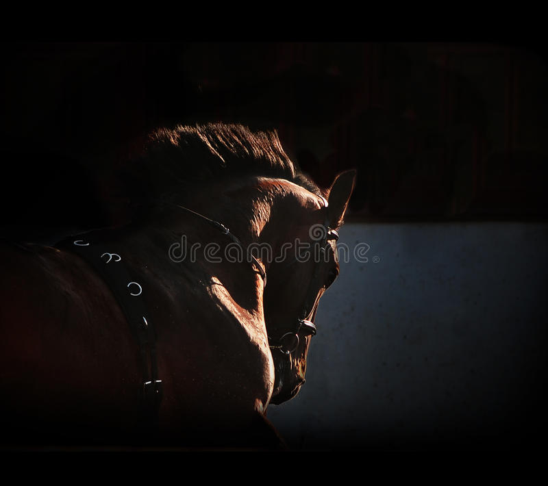 Horse silhouette on the dark background. The horse silhouette on the dark background royalty free stock photography
