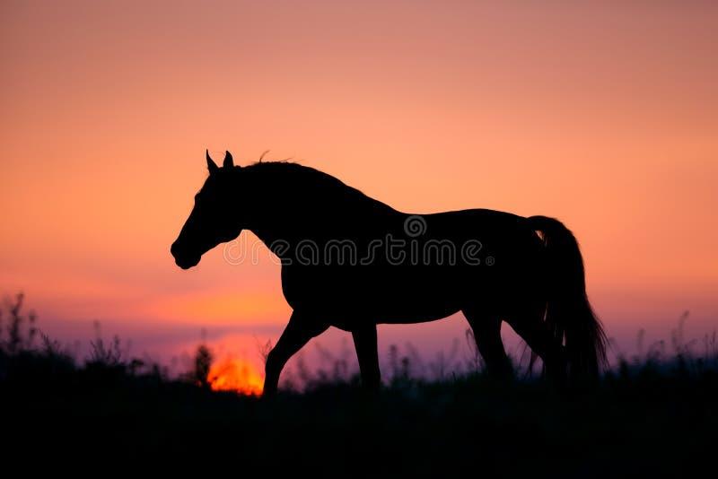 Horse silhouette on sunrise background stock photos