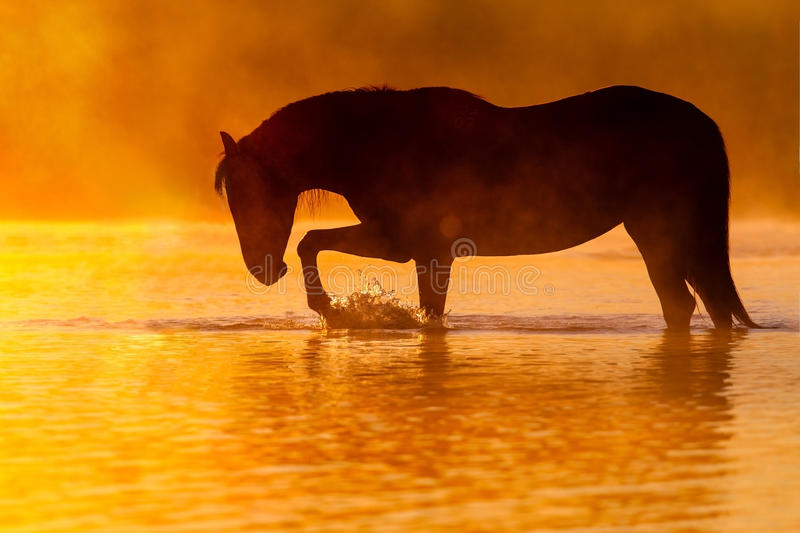 Horse silhouette sunset royalty free stock photography