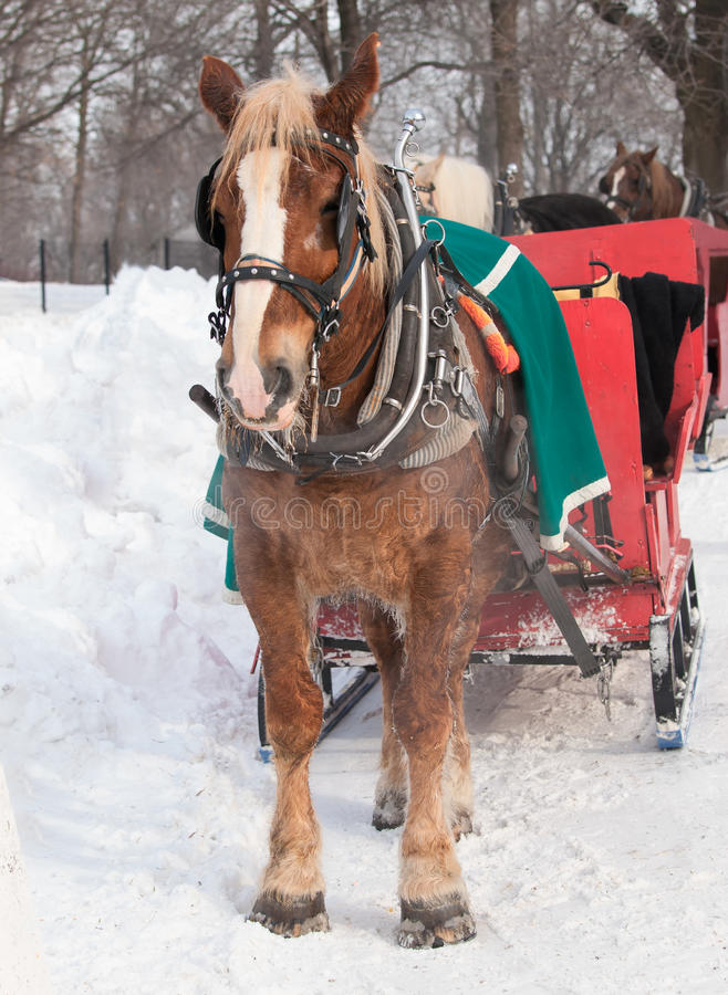 Download Horse and sleigh stock image. Image of winter, frost - 28412359