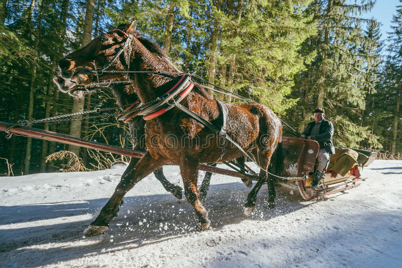 Horse sleigh carriage royalty free stock photography