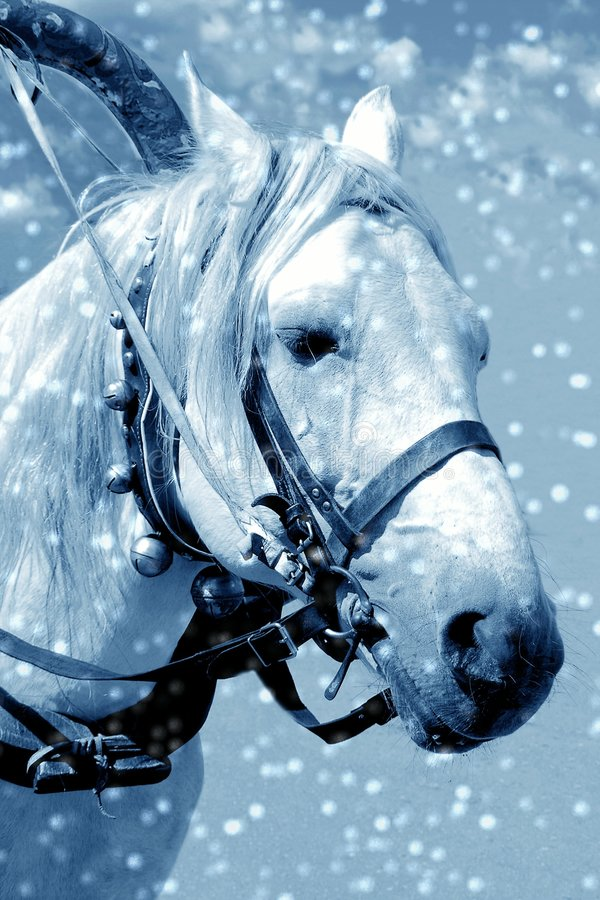 Download Horse in snow stock image. Image of night, background, white - 353791