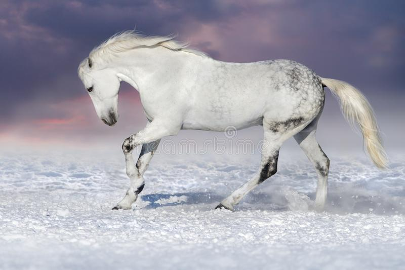 Horse in snow royalty free stock image