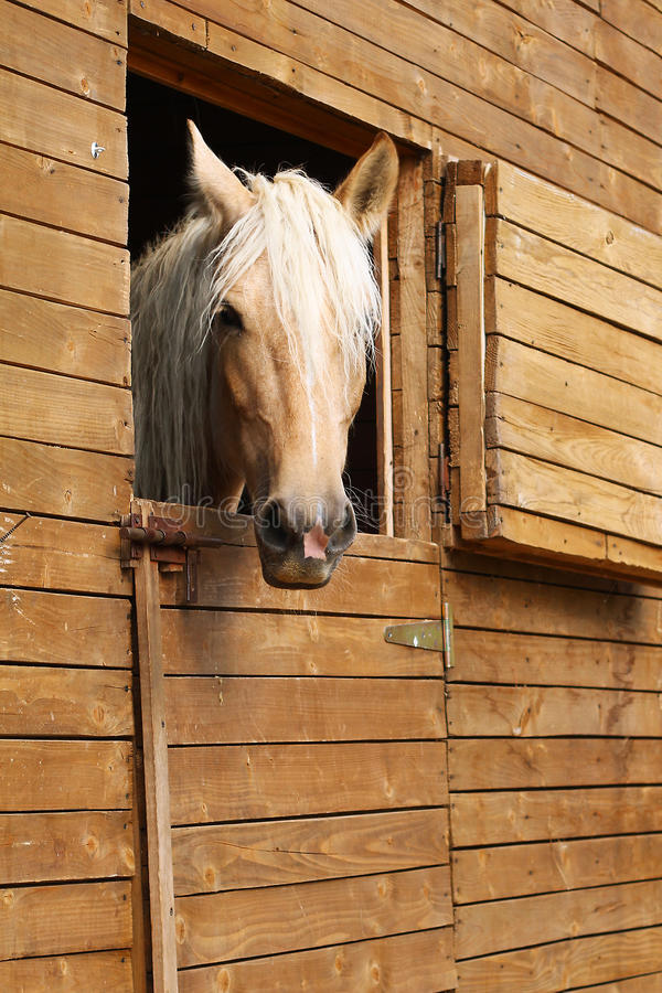Download Horse in the stable stock image. Image of brown, farm - 22338029