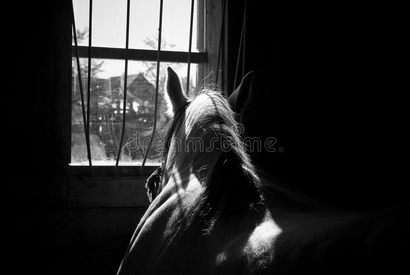 Horse in a stable. Horse looking through a window in a stable stock photography